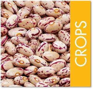 crops square.jpg