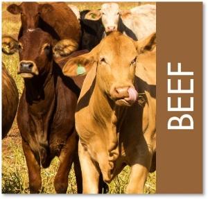 beef square.jpg