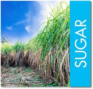 sugar cane v2.jpg