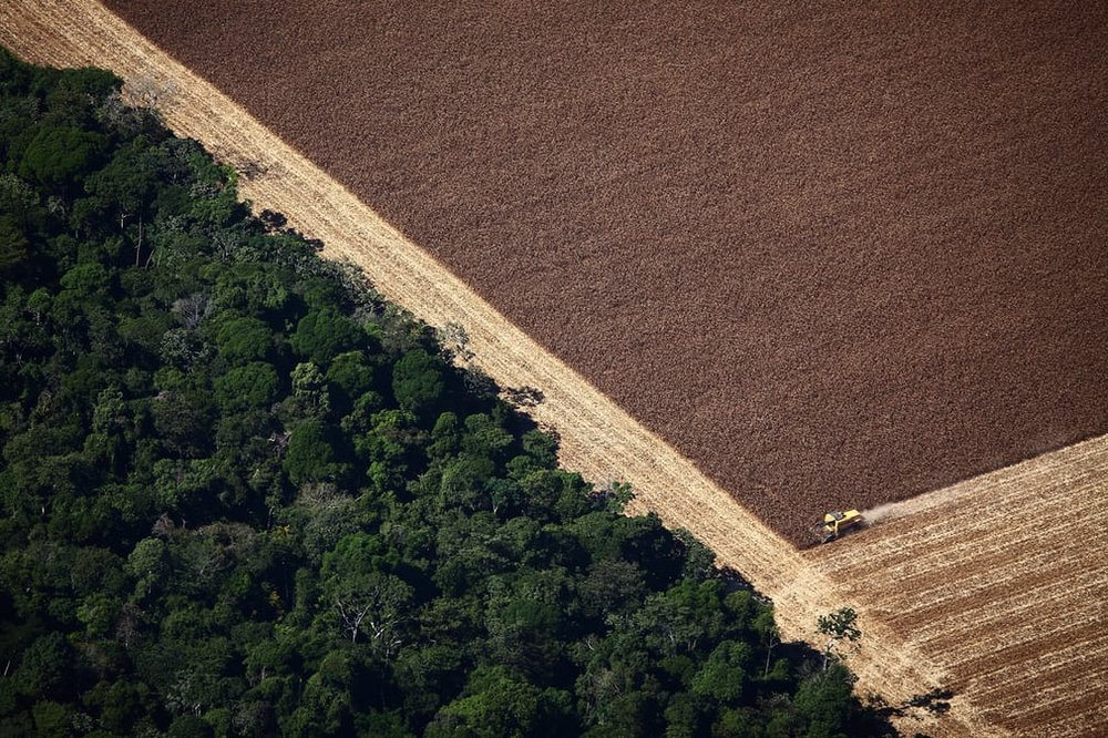Soy farming next to the Amazon Rainforest