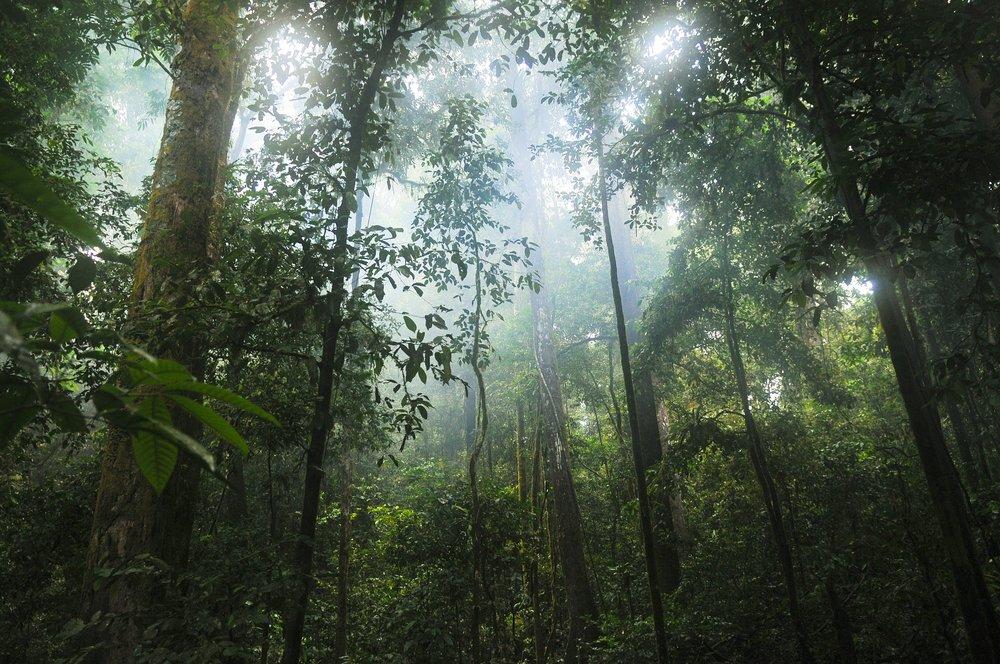 jungle-601542_1920.jpg