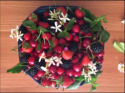 fruit biacesa ledro.png