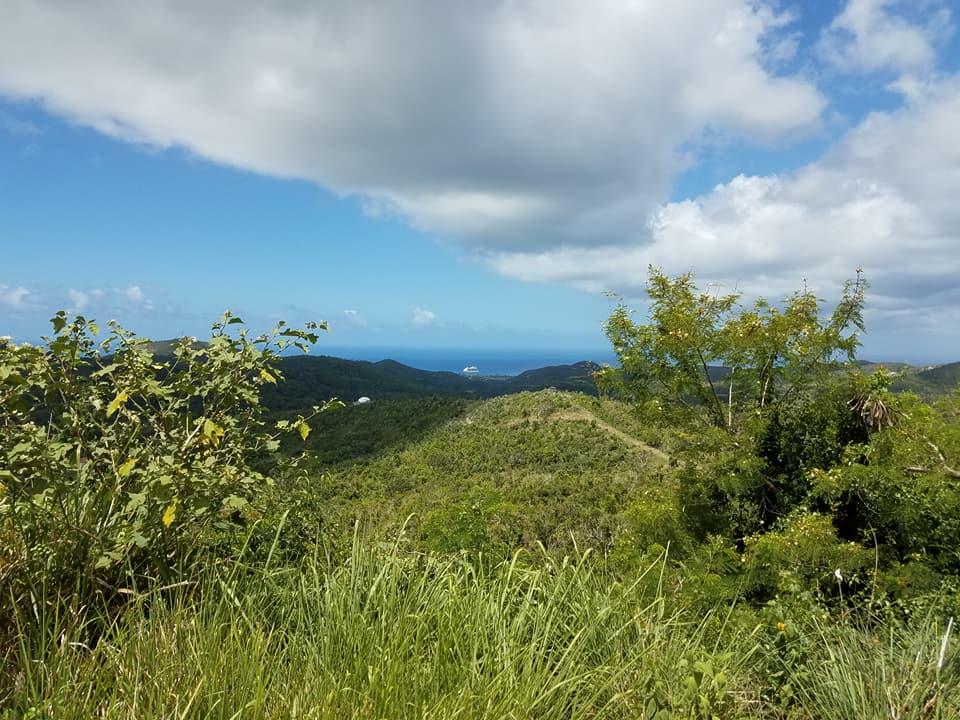 Gecko Island 4.jpg