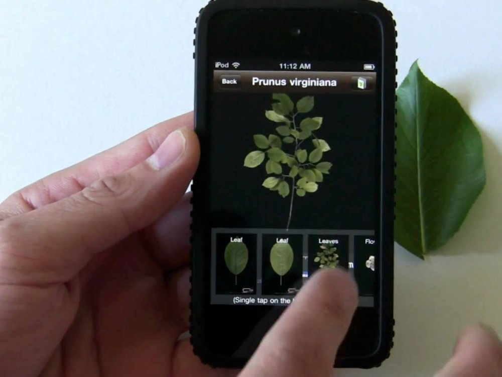 Find food with a plant identification app.