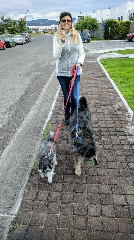The Amazing Stroll: Reporting for Doggy Duty