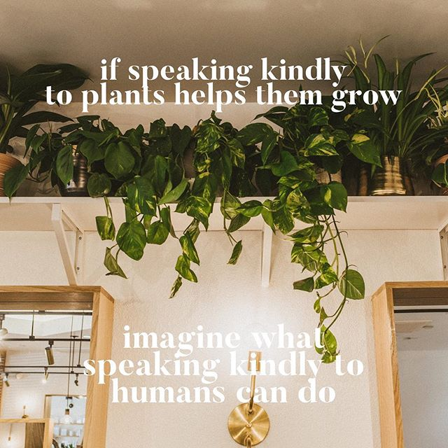 a little love never hurt nobodaay🌱 ———- #indoorplants #indoorgarden #selflove #lasvegashair #lasvegashairstylist #lasvegassalon