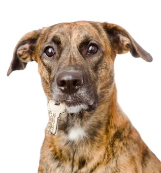 dog holding keys.jpg