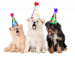dogs with party hats.jpg