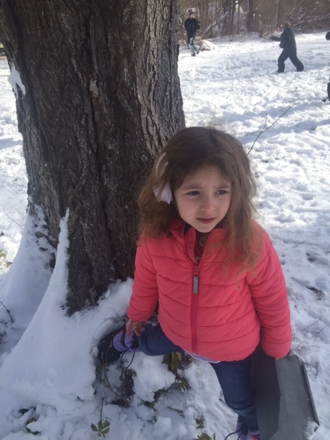 She found our maple tree!