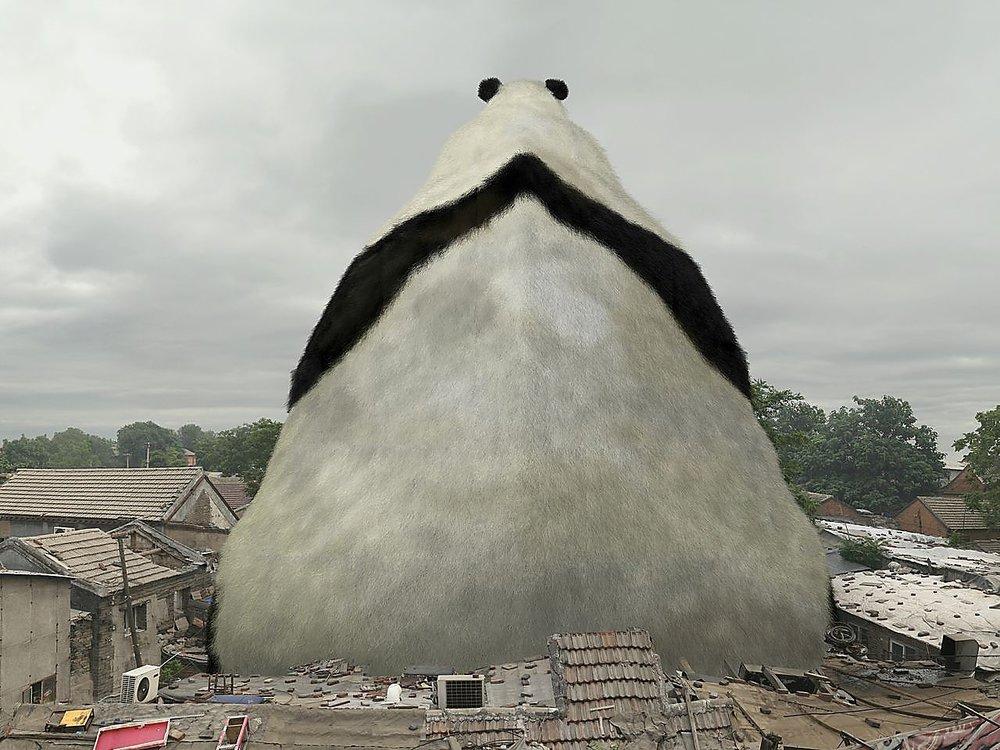 Liu-di-panda.jpeg
