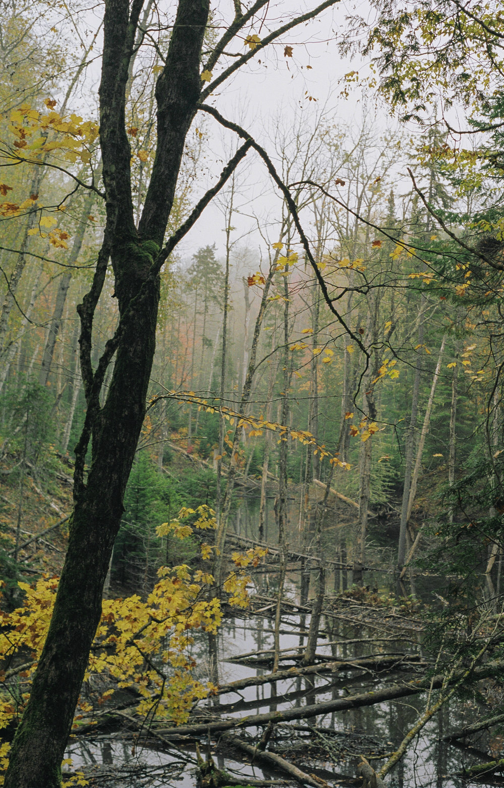 Nature Québec - Photographie 35mm & 120mm