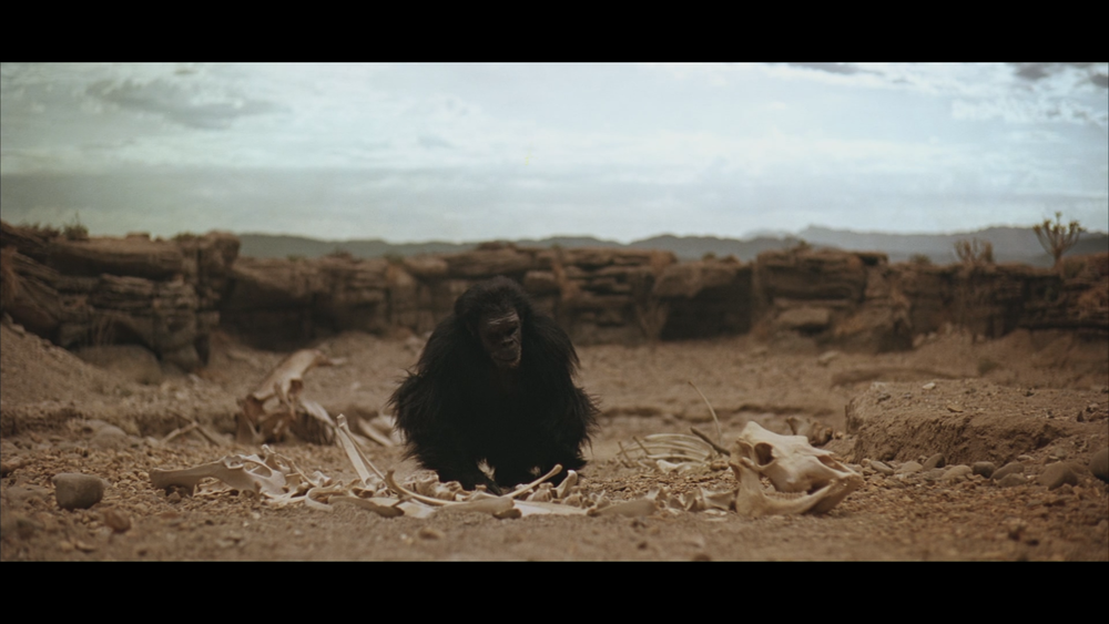 The man ape, Moon-Watcher, curiously looks at a piles of bones.  With a run time of about one minute and fifteen seconds, this extremely long take allows the audience to observe man apes as primitive, herbivorous beings for one final moment.