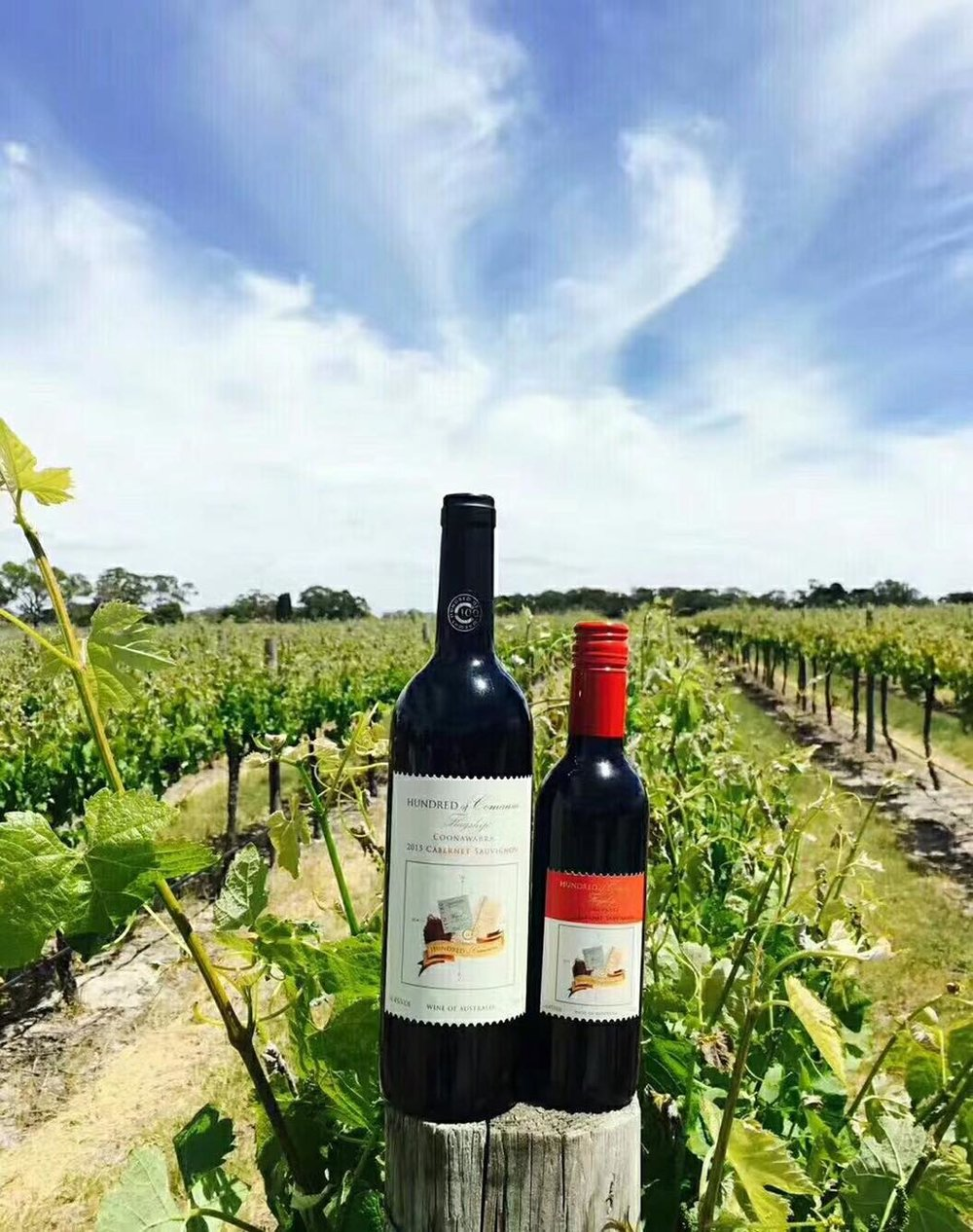 our_wines.jpg