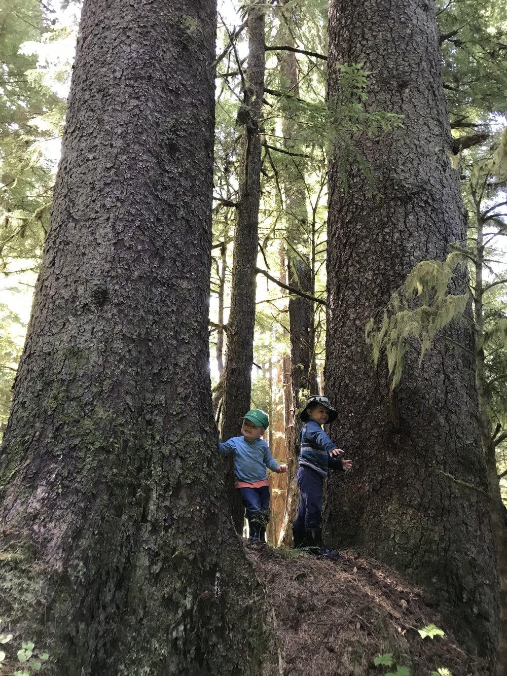 Big trees, good climbing.