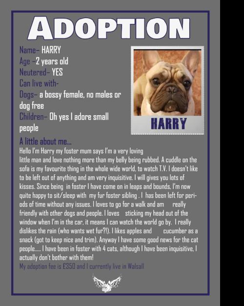 HARRY ADOPTION 2018.png