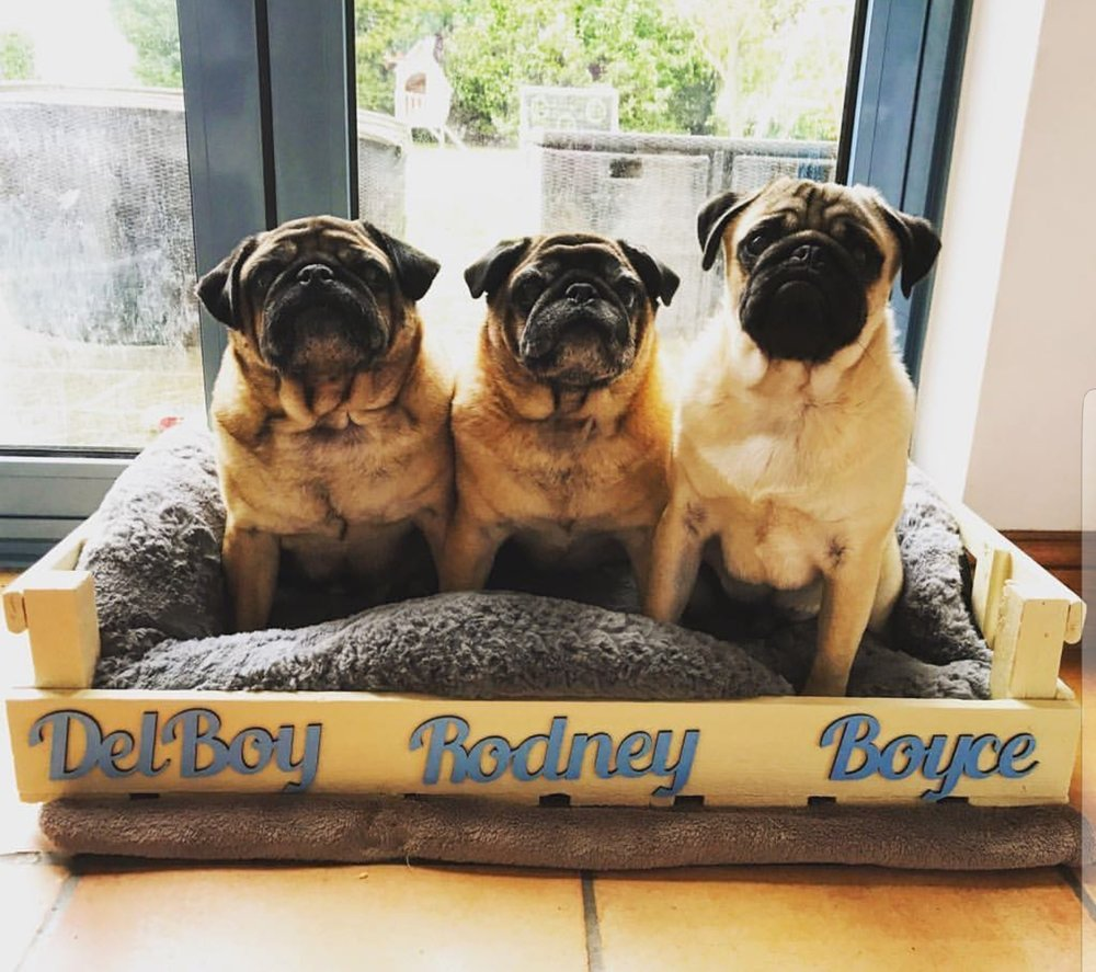 "Del Boy, Rodney  and Boyce  ""Company mascots""    Email:  They would love an email address   Likes:  Long walks on the beach, GSOH  Dislikes:  Not eating"