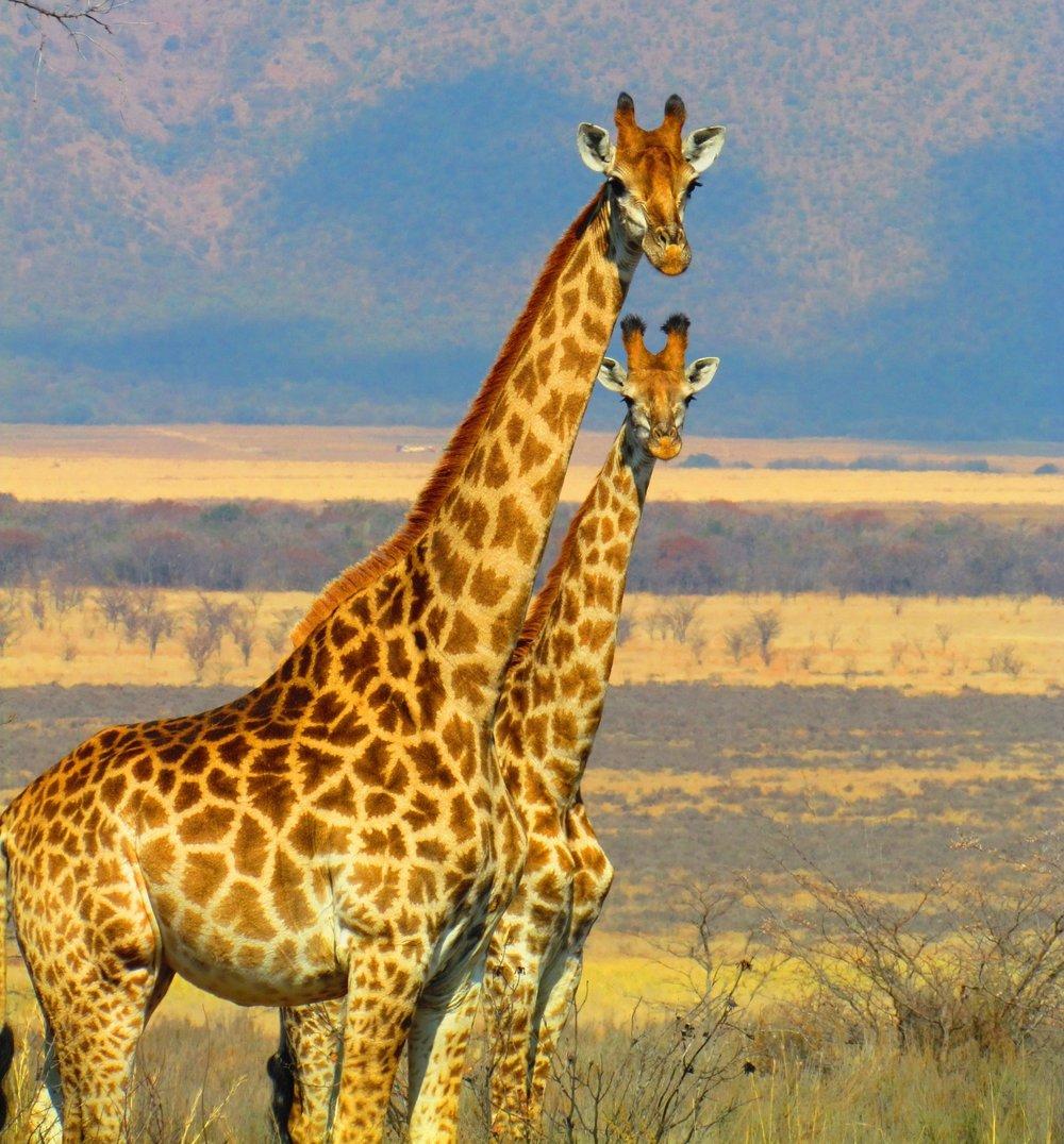 Conservation -
