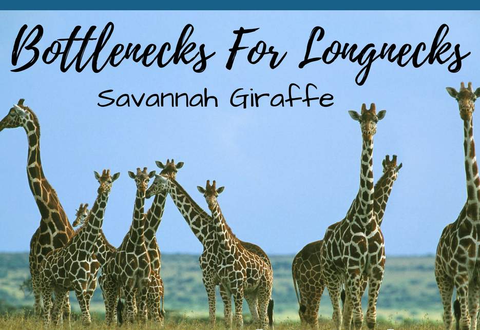 Bottlenecks For Longnecks.png