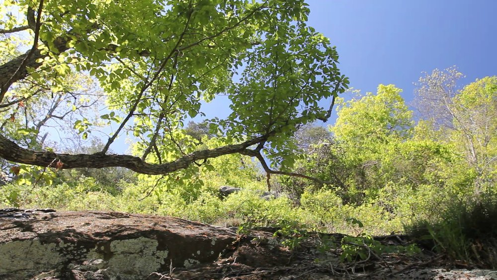 Rockey Face outcrop, chestnut oak, pan left to right.jpg