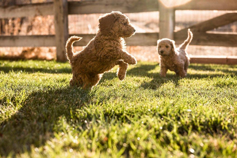 pup - jumping pup.jpg