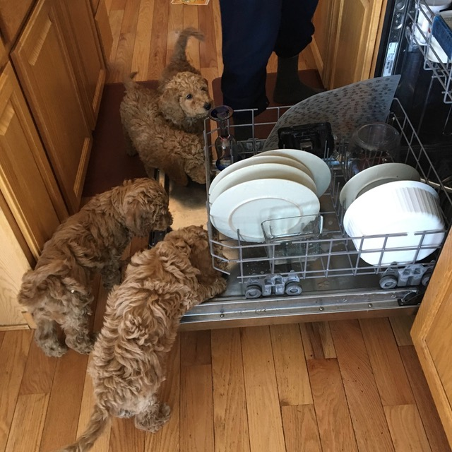pups and dishwasher.jpeg