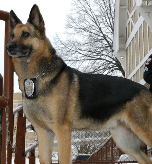 K9 Mosely, UW-Madison PD