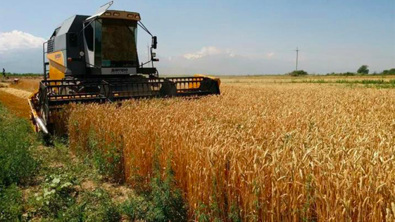 A wheat field in the China-Kazakhstan Modern Agriculture Innovation Park in Almaty (photo credit: Beijing Review).