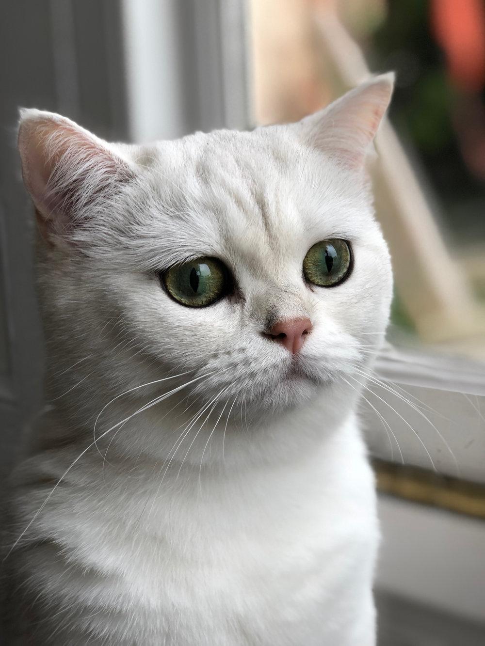 catblur2.jpg