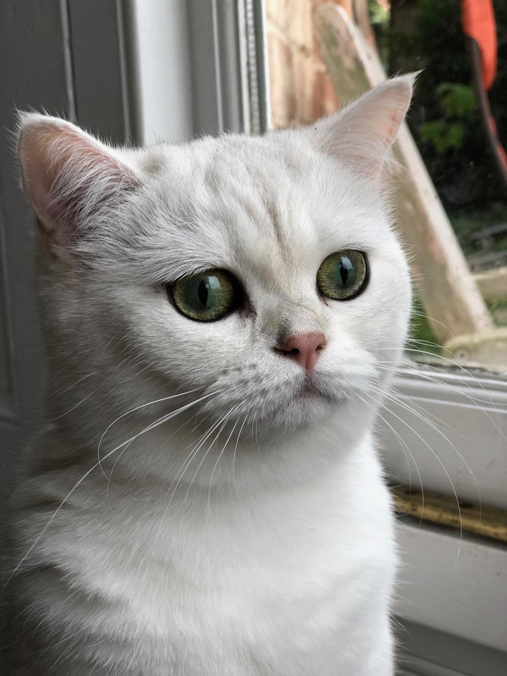 catblur1.jpg