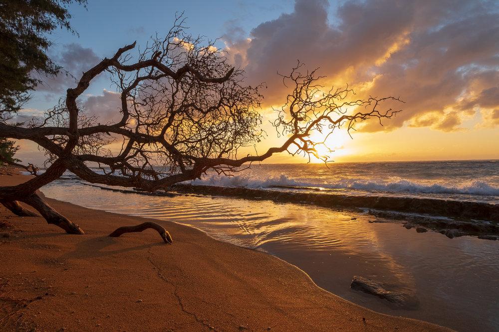 Scraggly Sunrise, Kapa'a  Camera: Fujifilm X-T1 Shutter speed: 1/100 sec Aperture: f/8 ISO: 200 Photo: Jeff Carlson