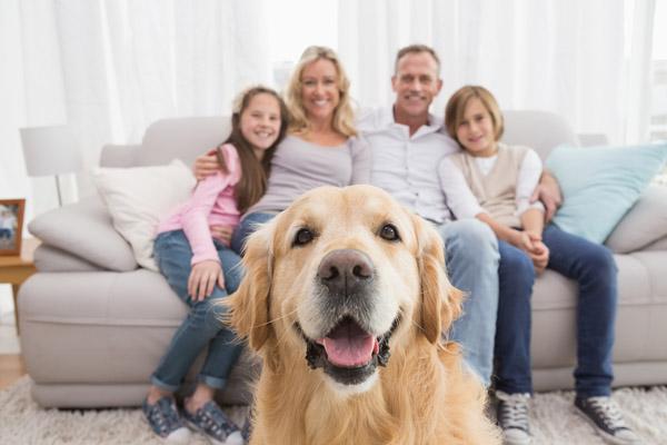 Hund-Familie.jpg