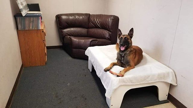 First-class boarding and training! Personal trainer, caretaker, and entertainer! Includes doggy gym, AC, and camera surveillance in a furnished room! . . #WolfgangExpertDogTraining #WolfgangExpertDogTrainer #DogTraining #DogTrainer #WinterDays #WinterWeather #NothingButTheBest #LosAngeles #SoCal #SouthernCalifornia #DogsOfInstagram #WorkHardPlayHard #InKennelTraining #Gardena #Hollywood #WestHollywood #BeverlyHills #RodeoDrive #RunyonCanyon #ExpertTrainers #FunInTheSun #ProtectionDog #ProtectionDogs #ProtectionGSD