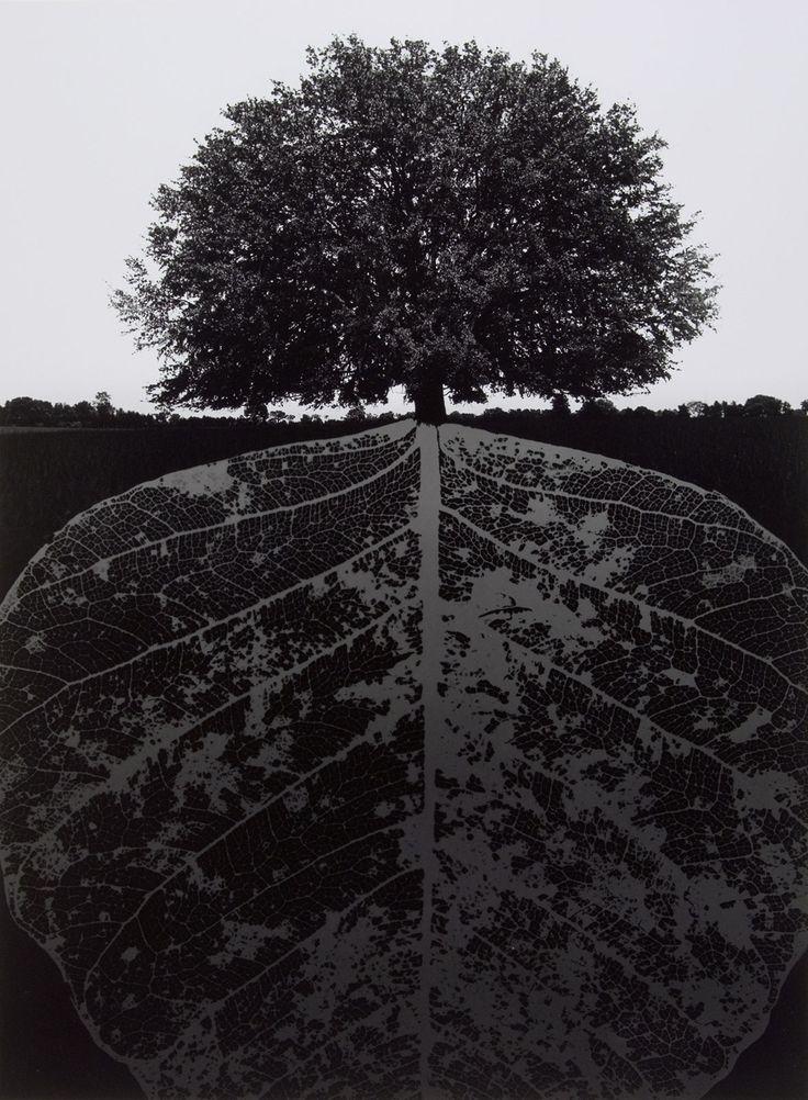 Jerry Uelsmann // Untitled , 1963 // gelatin silver print