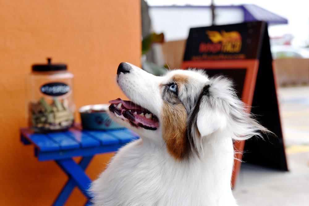 Sadie at Fusion Taco, Kimberly Park (1).JPG