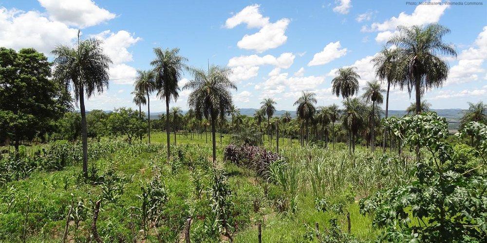 landscape-trees-paraguay-stock_1.jpg