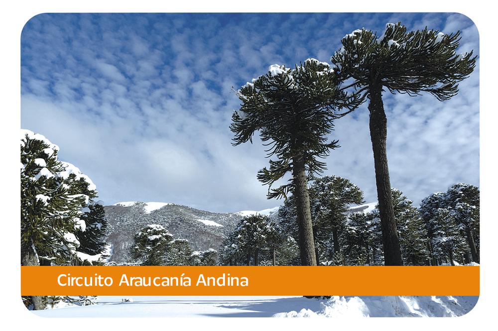Araucanía Andina - Su característica principal es la gran concentración de centros y formaciones volcánicas, con altos niveles de actividad y muy reciente. Esto convierte a la Araucanía Andina en un sitio privilegiado para quienes quieran ver y aprender en terreno sobre los distintos procesos volcánicos y sus impresionantes consecuencias en el paisaje.