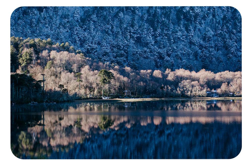 Lago-Quillelhue_Araucarias_Nieve.png