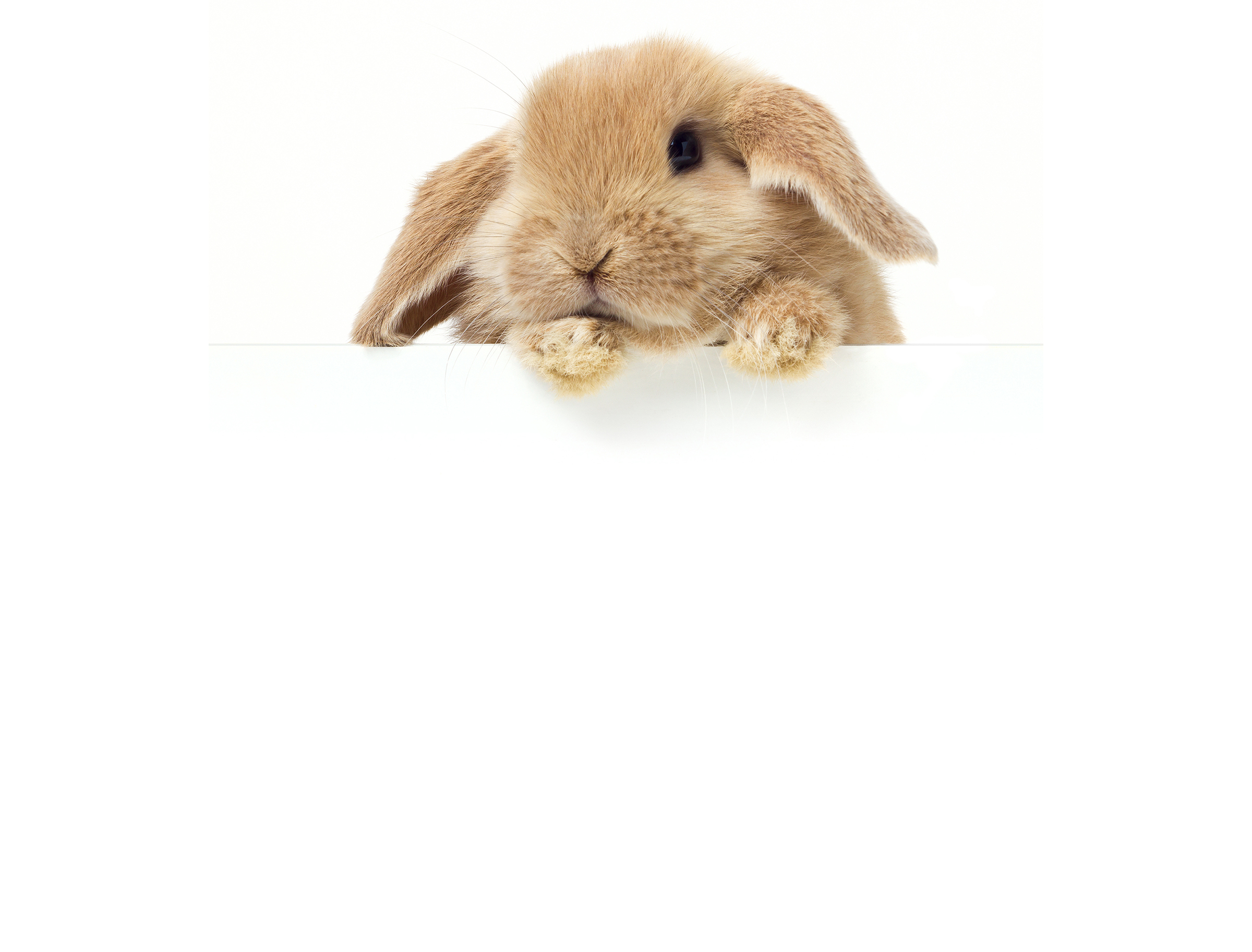 We Provide THE Bunnies And Fun