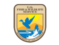 logo_fish.png