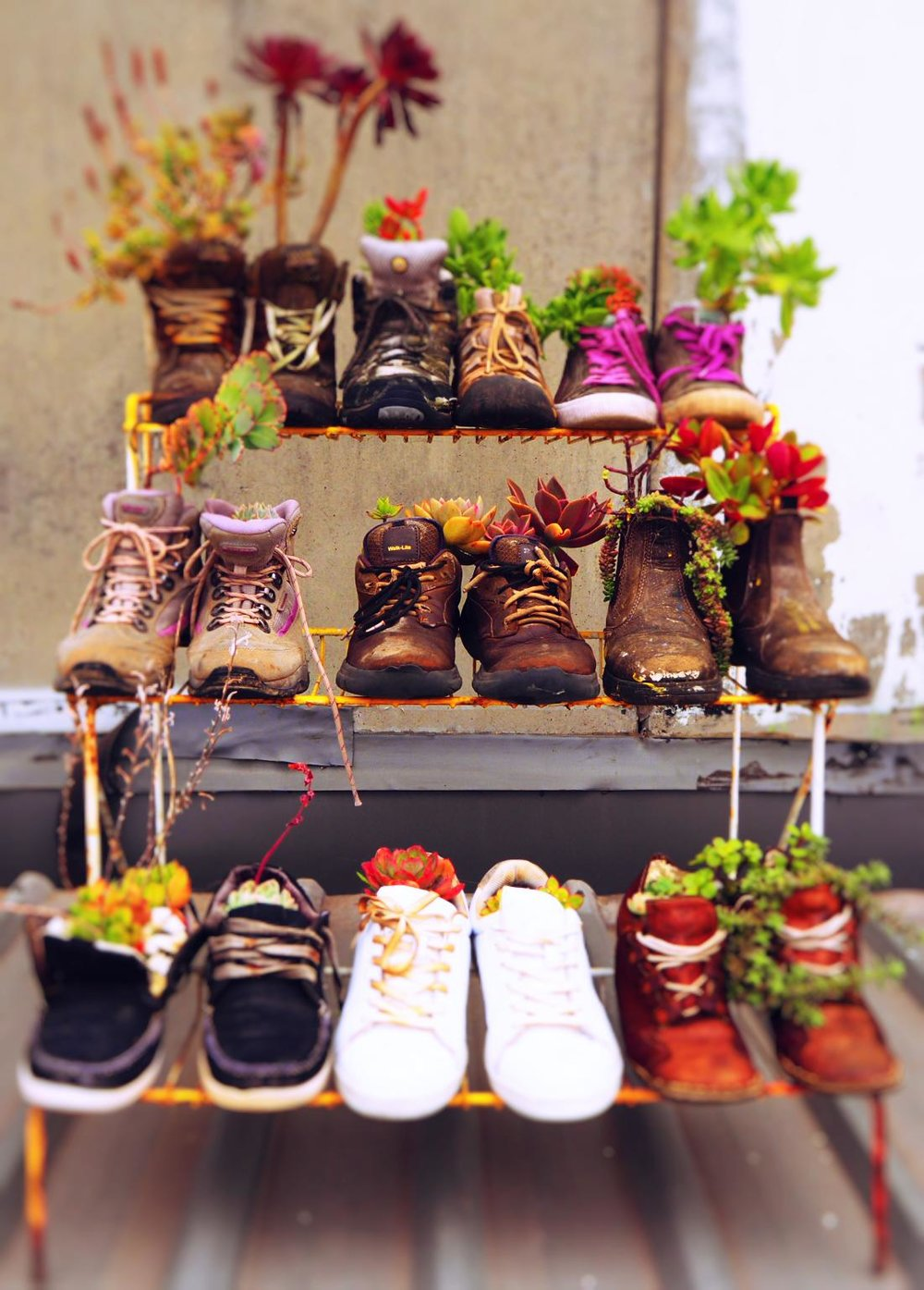 Shoe garden shelves.jpg