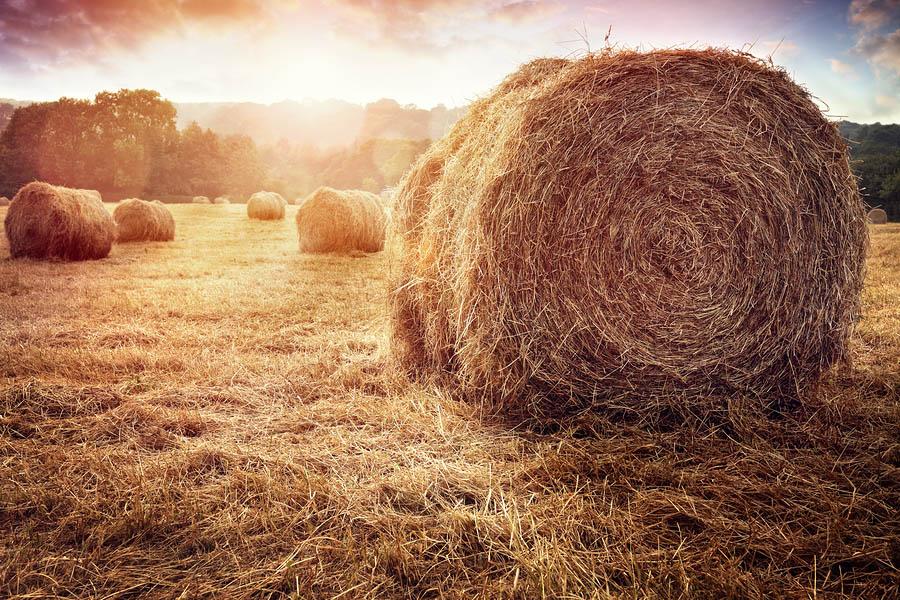 bigstock-Hay-bales-harvesting-in-golden-192726304.jpg