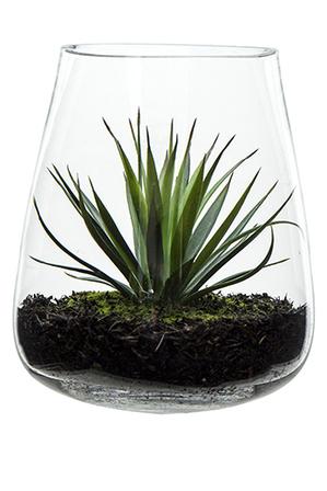 Plante Myer