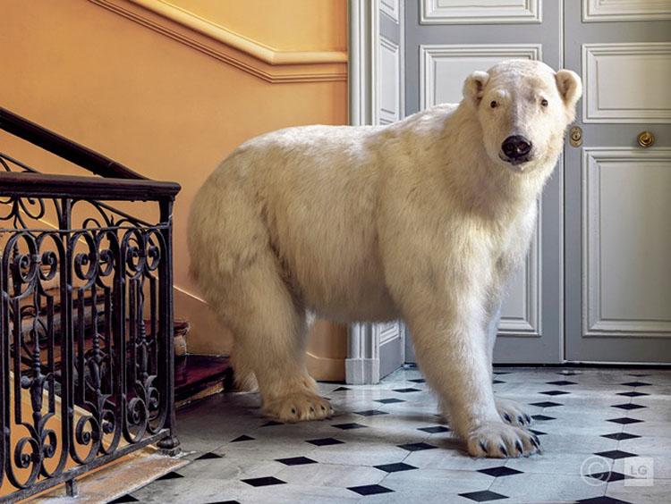 *SOLD* Polar Bear at Deyrolle - Horizontal 3/75