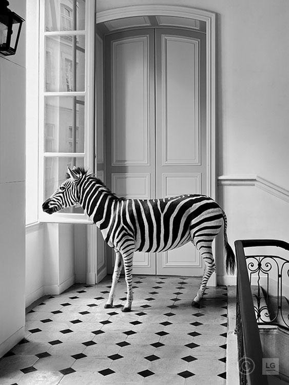 Zebra at Deyrolle on Stairs Landing #1 3/75