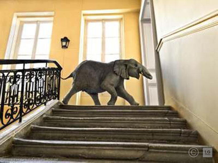 Baby Elephant Running in Deyrolle, Paris