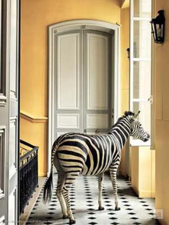 Zebra at Deyrolle on Stairs Landing #2 3/75