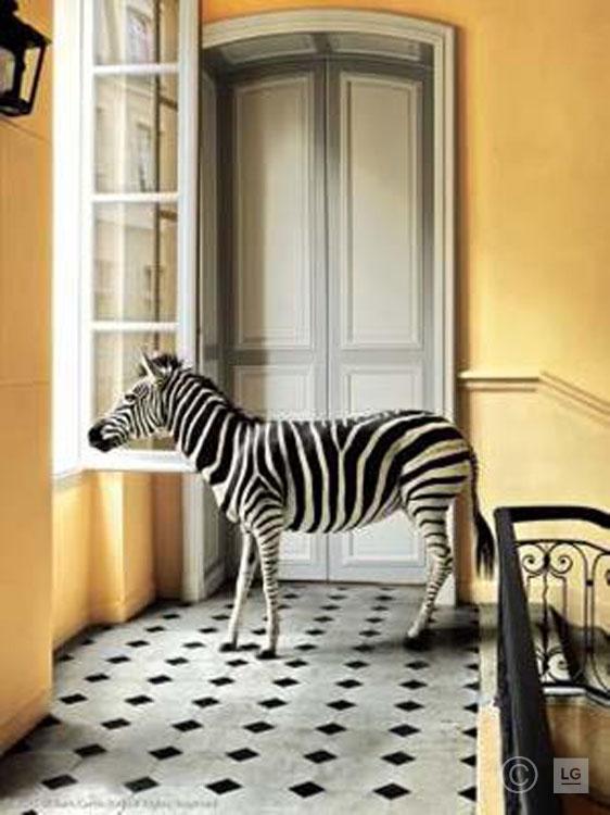 Zebra at Deyrolle on Stairs Landing #1 10/75