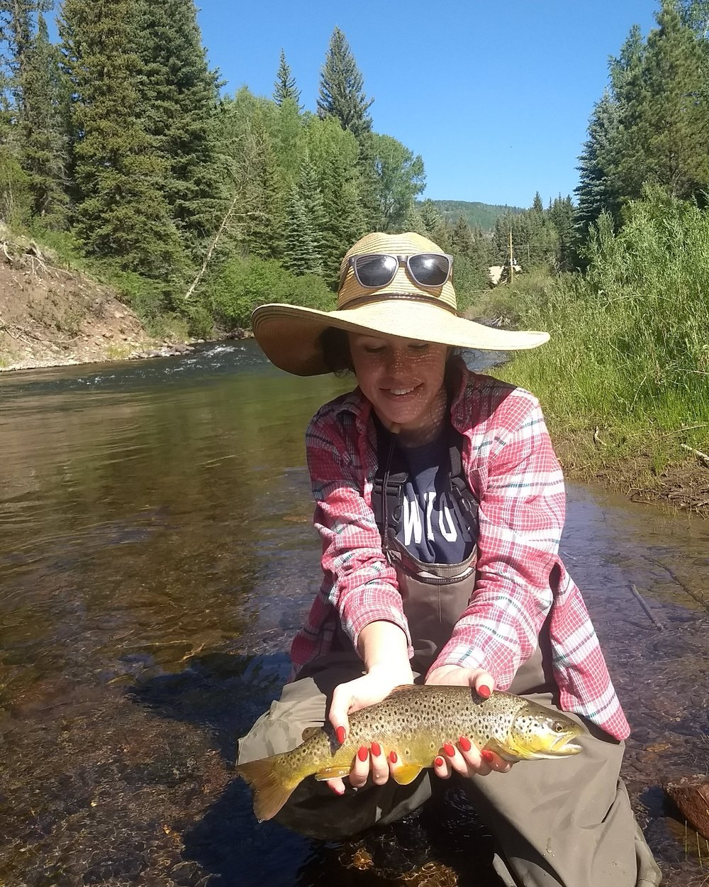 Fly Fishing New Mexico - New Mexico Brown Trout
