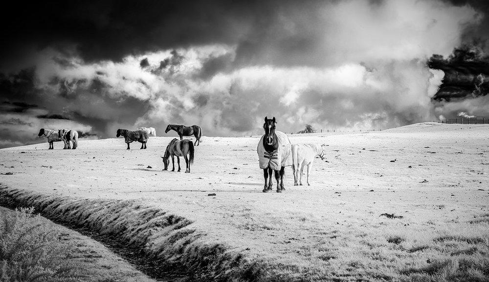 Paul Fowles Photography, Aberdovey Aberdyfi, Horses Ceffylau ar y Bryn.jpg
