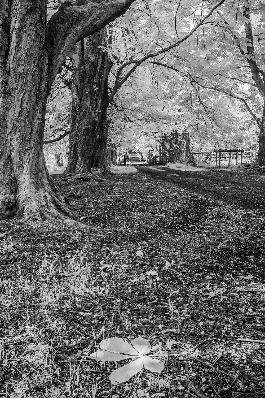 Leafy Walk Paul Fowles Photography, Aberdovey Aberdyfi,.jpg